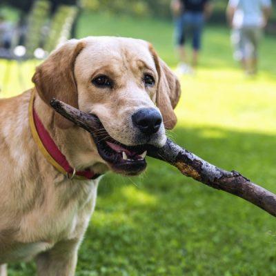 Comment faire du camping avec son chien ?